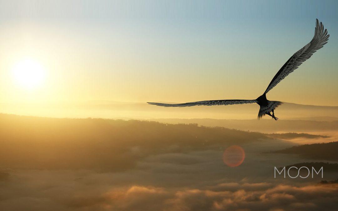 Como descobri minhas asas – Artigo para o livro do IBC (Instituto Brasileiro de Coaching)
